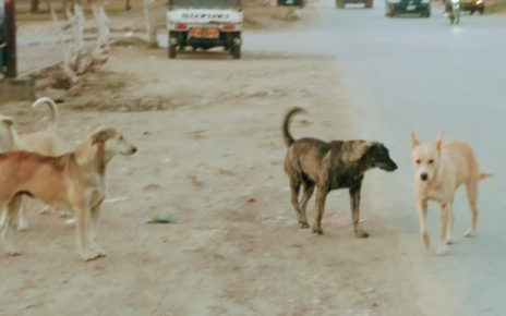 stray dogs roaming freely