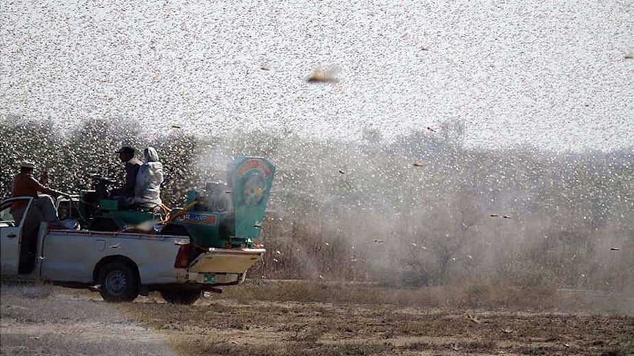 China to help fight locusts as major crops face danger