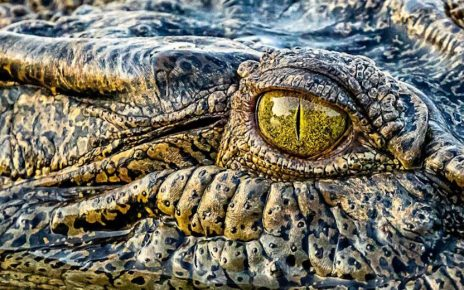 Crocodile, other species relocated from Islamabad to Sindh sanctuary