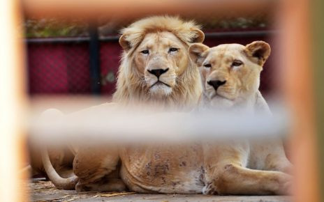Inquiry committee set up to investigate animals deaths in Islamabad Zoo